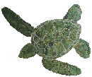 Hawaiian Green Turtle